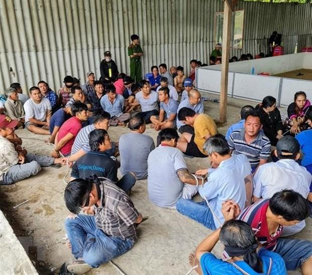 Đắk Lắk bắt 50 đối tượng núp bóng đá gà và cá cược